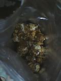 Karikari_popcorn