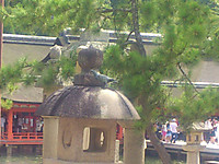 21hiroshima